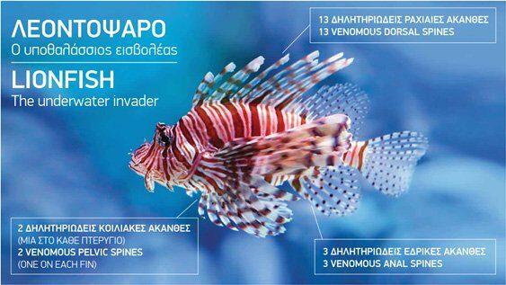 New app to monitor invasive lionfish