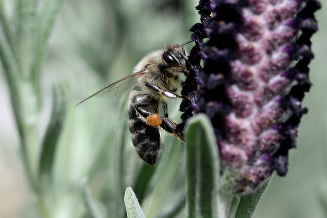 Public urged to download app to help science gather data on pollinators