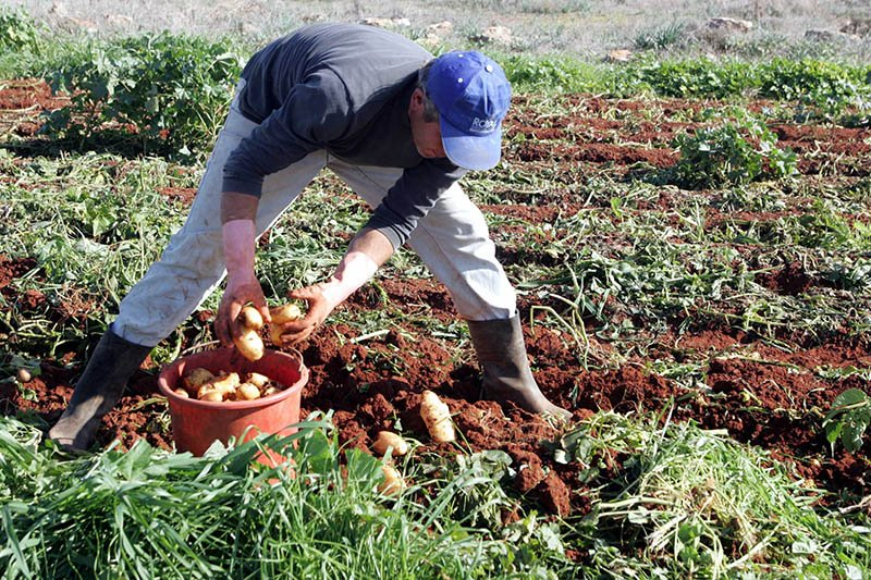State seeks place on EU map for Cyprus potatoes