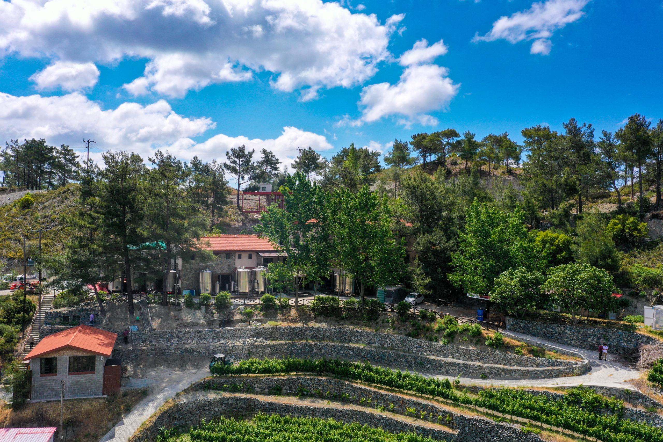 Cyprus wines maturing