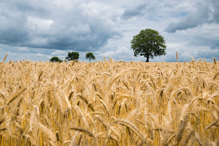 Minister says there is no shortage of grains